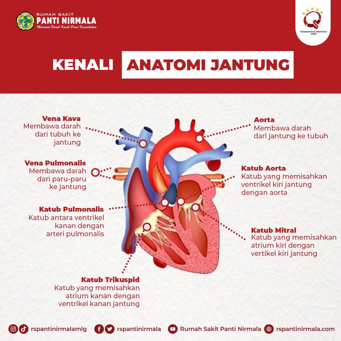 image-yuk-mari-kita-kenali-anatomi-jantung-32
